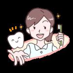乳歯と永久歯について